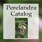 "essay on perelandra British author cs lewis's ""perelandra"" is one of the most religiously relevant  fantasy novels ever written set on the exotic planet of perelandra (venus),."