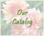 Introduction to Our Catalog