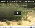 2007 Virtual Garden Tour 5: Tomato Patch