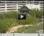 2007 Virtual Garden Tour 7: Fish Pond and Tadpool