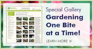 Special Gardening Series Gallery