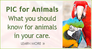 PIC for Animals