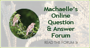 Question Forum with Machaelle
