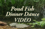 Perelandra Video: Pond Fish Dinner Dance