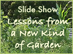 Lessons from a New Kind of Garden