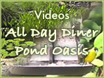 Pond Oasis and All Day Diner