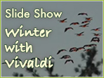Winter with Vivaldi