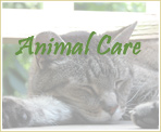 Animal Care for Beginners