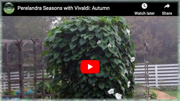 Vivaldi Autumn