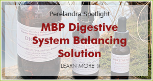 Spotlight Digestive Solution