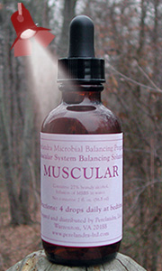 Muscular Solution